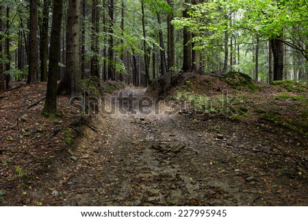 Muddy way in the autumn forest - stock photo