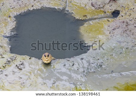 Mudskipper living near hold in the mud - stock photo
