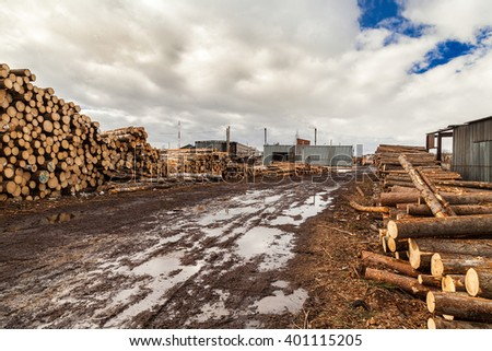 Mudy road at sawmill industrial  lots of logs
