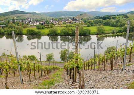 muelheim village on the wine route and moselle river  - stock photo