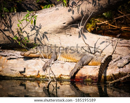 Mugger crocodile (Crocodylus palustris) in Bardia National Park, Nepal - stock photo