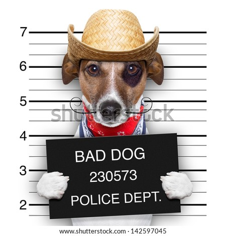 mugshot of a mexican very bad dog - stock photo