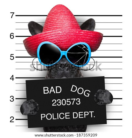 mugshot of very bad mexican wanted dog - stock photo