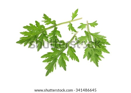 Mugwort - stock photo