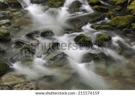 Muir Woods - stock photo