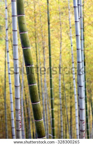 Mukeng Bamboo Forest in Anhui Province, China - stock photo