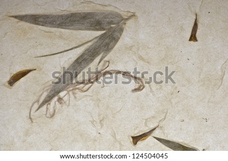Mulberry paper with bamboo texture background. Retro, rough and rustic handmade paper