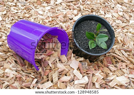 mulch and potted plant - stock photo
