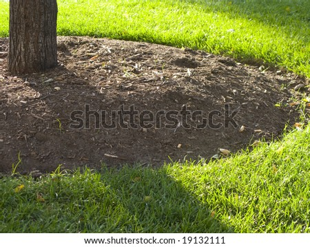 Mulch around a Tree - stock photo
