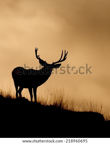 Mule Deer Buck with trophy antlers, skyline silhouette Deer hunting the western United States of Wyoming, Montana, Utah, Idaho, Colorado, Nevada, and Washington big game archery or gun hunt - stock photo