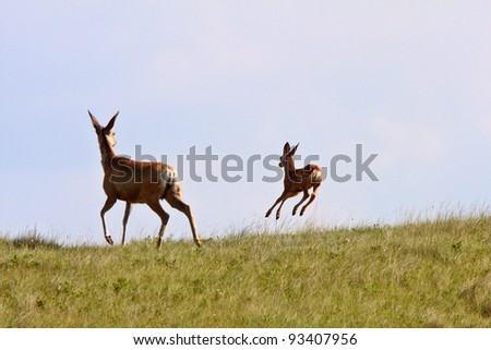 Mule Deer doe and fawn in Saskatchewan - stock photo