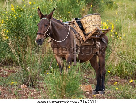 mule in the mountains, Sicily - stock photo