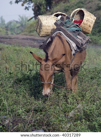 Mule packed for a trip - stock photo