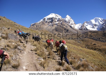 Mule train, carrying loads, with Cuyoc mountain in background, Cordillera Huayhuash,Andes, Peru, South America - stock photo