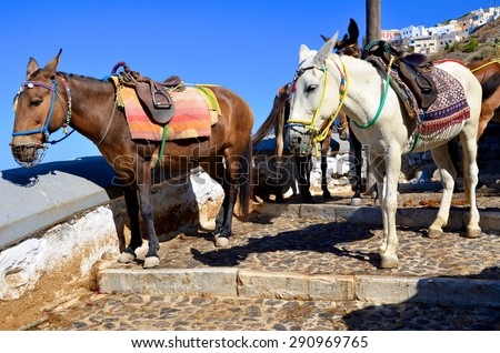 Mules in Santorini, Greece - stock photo