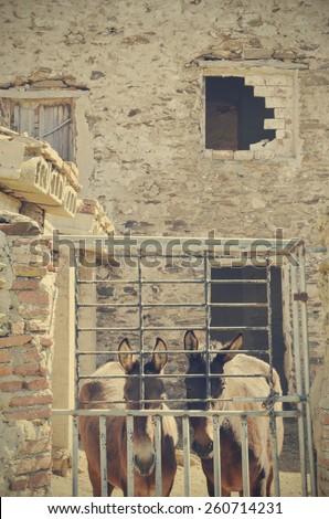 mules in the abandoned house