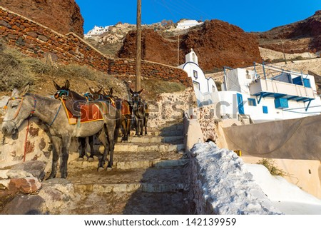 Mules waiting on Santorin - stock photo