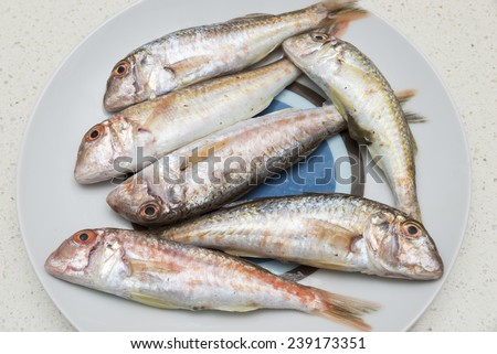 mullet small stalls on a plate - stock photo