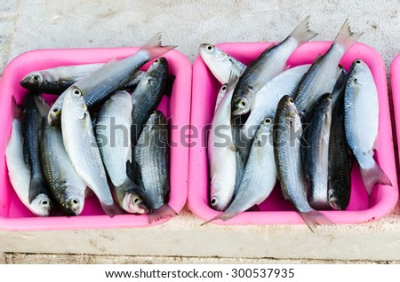 Mullets fishes are for sale at a street market. - stock photo