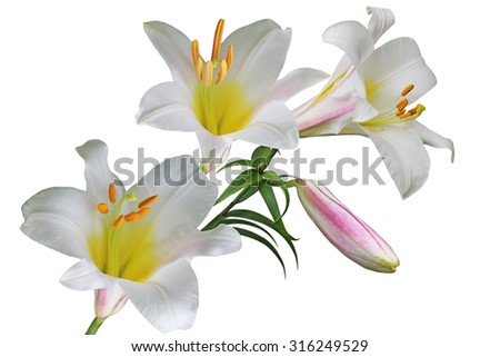 Multi color lily flower bouquet isolated on white background - stock photo