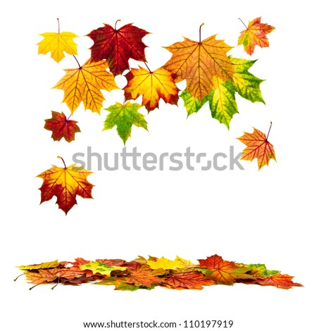 Multi-colored autumn leaves falling down, with white copy space - stock photo