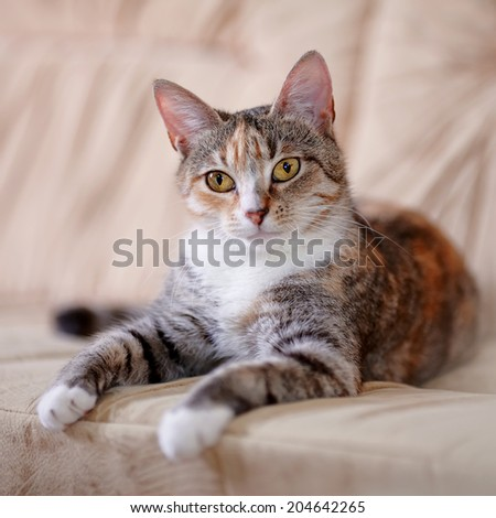 Multi-colored cat with yellow eyes. Yellow-eyed cat. Striped not purebred kitten. Small predator. Small cat. - stock photo