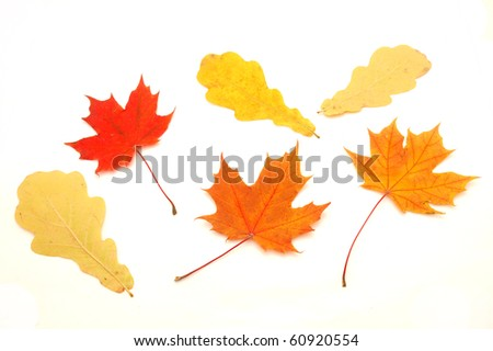 Multi-colored leaves on a white background - stock photo
