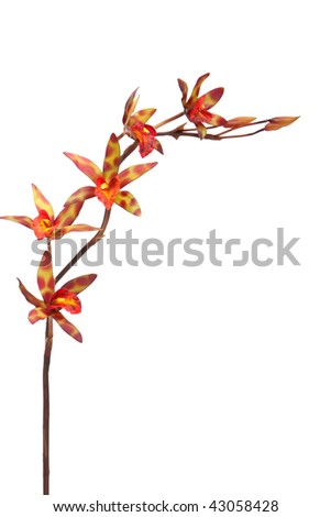Multi colored orchid on white background