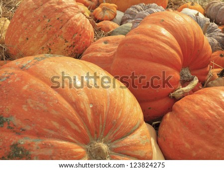 multi colored pumpkins - stock photo
