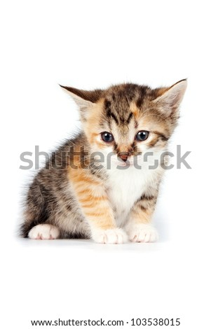 Multi-colored Small kitten on a white background - stock photo