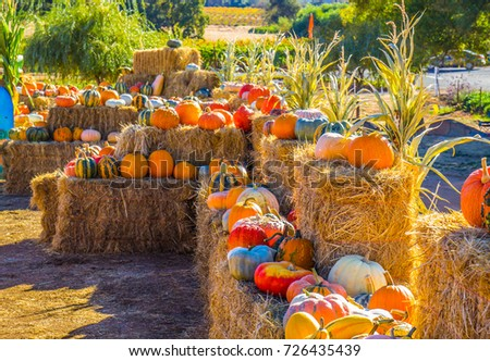 Multi Colored Squash & Pumpkins For Halloween & Thanksgiving