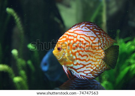 Multi Colored Tropical Fish In Saltwater Tank - stock photo