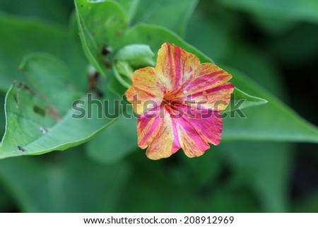 Multi coloured Flower - stock photo