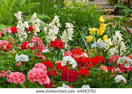 multi flower in the garden - stock photo