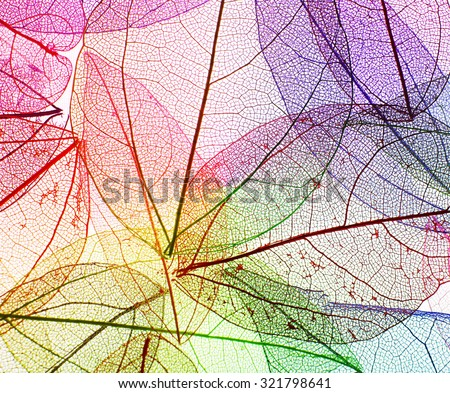 Multicolor decorative skeleton leaves - stock photo