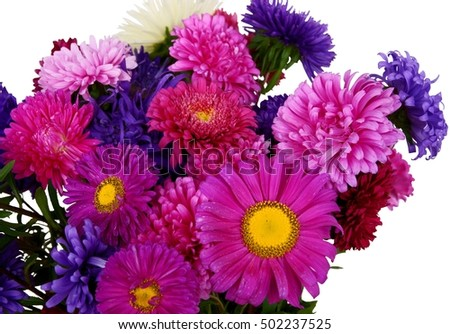multicolor flower of aster