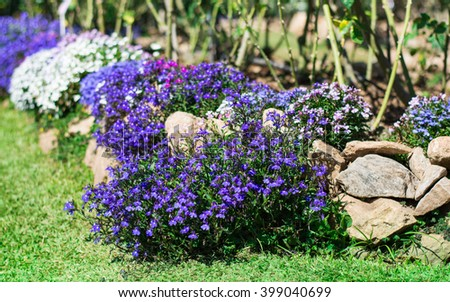 Multicolor flowers bushes in the garden - stock photo