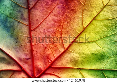 multicolor leaf with texture - stock photo
