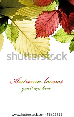 Multicolor leaves on the white - stock photo