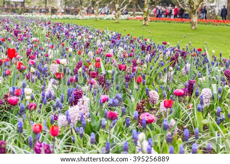 Multicolor tulips and mixed color flowerbed in the grass in the park at the day light - stock photo