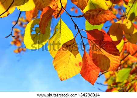 Multicolored autumn leaves over blue sky background - stock photo