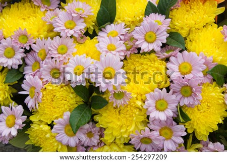 multicolored daisy flowers pattern background - stock photo
