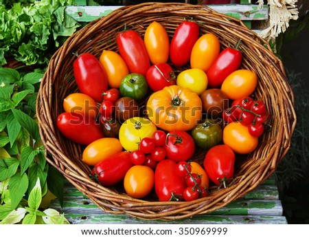 Multicolored different kinds of tomatoes in a basket at market.  - stock photo