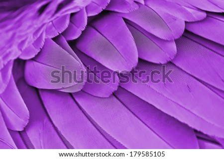 Multicolored feathers,Closeup purple feather ,background texture, abstract - stock photo