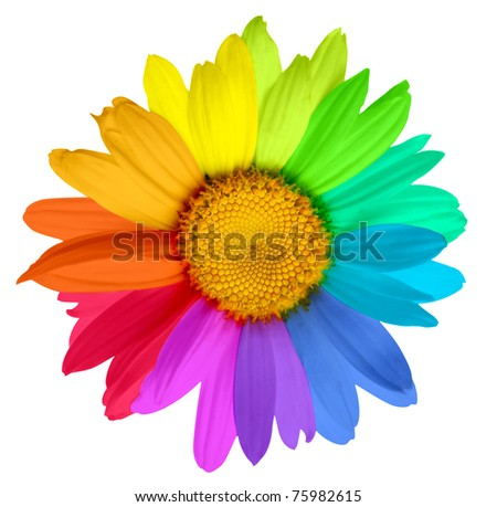 multicolored flower - stock photo