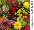 multicolored flowers background - stock photo