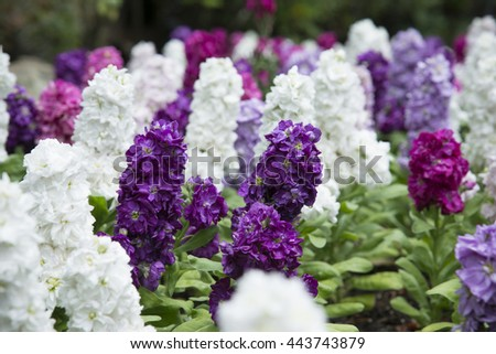 Multicolored flowers growing in flower bed, very shallow focus - stock photo