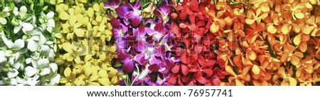 Multicolored orchids arranged on backgrounds - stock photo