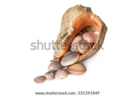 Multicolored shells fell out from big seashell - stock photo