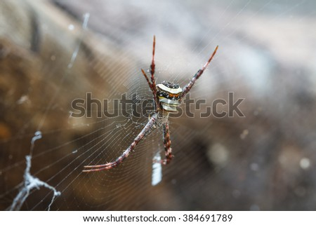 multicolored Spider with Prey - wasp spider Argiope bruennichi in tropical forest - stock photo